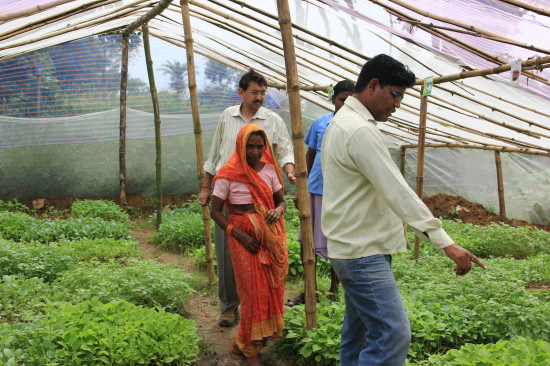 Partner staff in India showing plant nursery.