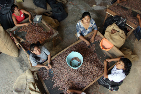 Women in Peru sort cocoa beans. Photo by Olaf Hammelburg, for LWR