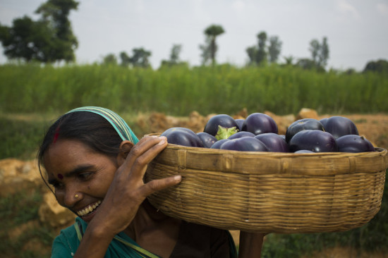 Woman carrying basket of eggplants