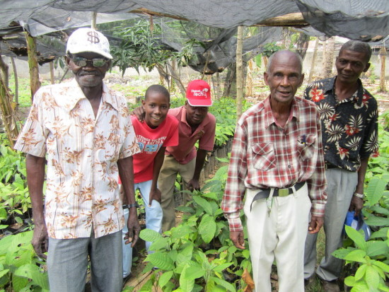 Cocoa farmers stand among their crops in northern Haiti
