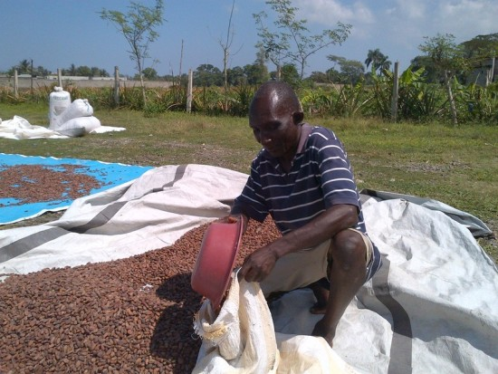 A cocoa farmer in northern Haiti fills a bag with dried cocoa beans