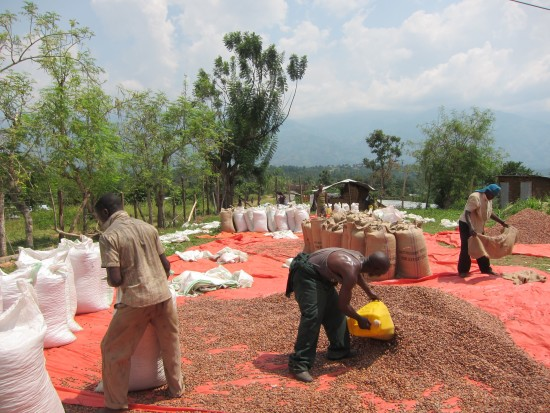 A group of  farmers bag dried cacao to be sold in local markets.