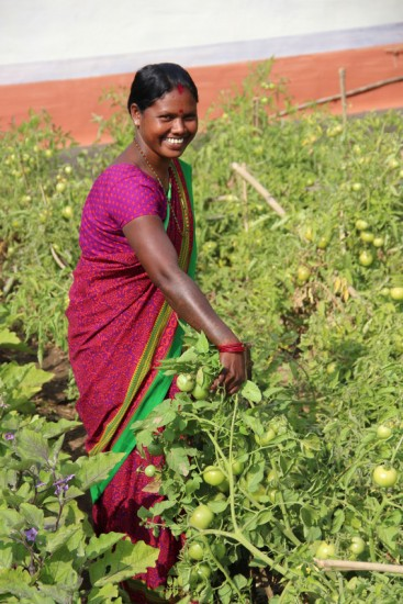 Sarita Maraudi shows off her winter tomatoes, made possible by her village's new pump irrigation system. Tomatoes in January/ February will fetch Sarita and others in her SHG a good price since the local markets are not flooded with them. Pictured: Sarita Marandi shows off her tomatoes, which she can grow in the winter bc of irrigation. She will get a better price at the market for them since she will be selling them outside of their typical season. The SHG in Dokdar has been able to successfully cultivate previously barren land thanks to their new pump irrigation system. Irrigation also lets them grow crops outside of the monsoon season, so they have year-round food security. Because of the improved farming practices and technologies introduced to Dokdar, their annual yields have increased so significantly that fewer men have to migrate for work and can stay to help farm.