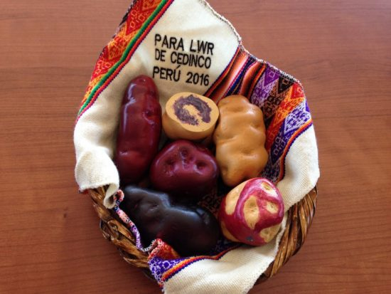 This is a photo of a gift from Richard Aparco from the Centro de Desarrollo Integral de Comunidades (CEDINCOâCenter for Integral Community Development). He visited LWR on 2/18/16 to talk about the project âFood Security and Improved Nutrition among the Highlands Communities of Castrovirreyna - Huancavelica. These are ceramic models of some of the potato varieties grown by families as part of the project.
