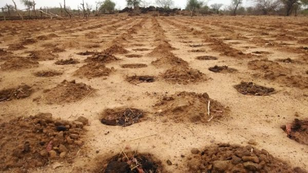 These zai pits in Burkina Faso effectively deliver rain and nutrients to seeds to help grow crops more efficiently in dry areas.