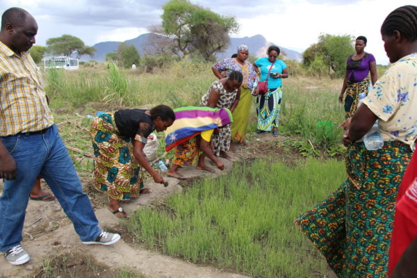 This women's group in Kenya observes onion crops on a demonstration plot.