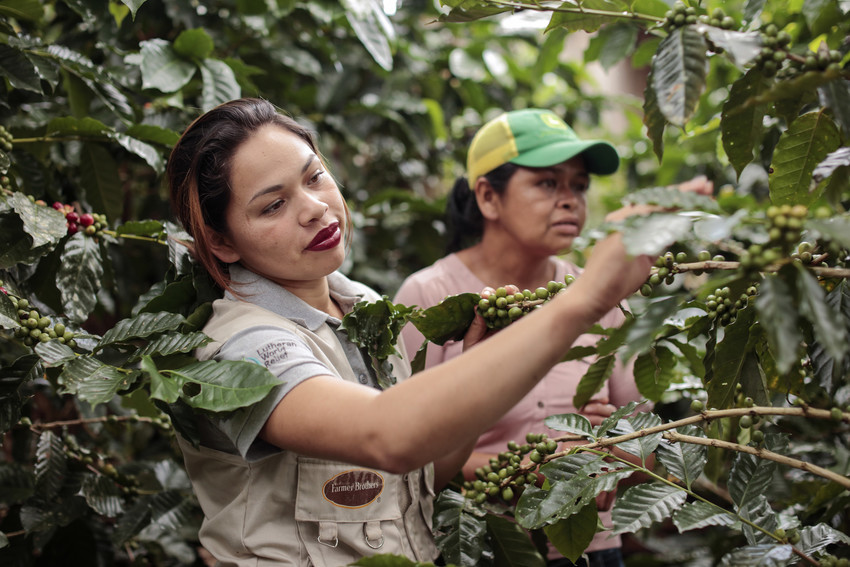 Maryeli Lopez, 22, is seen taking doing an evaluation on the health of her family's coffee land.