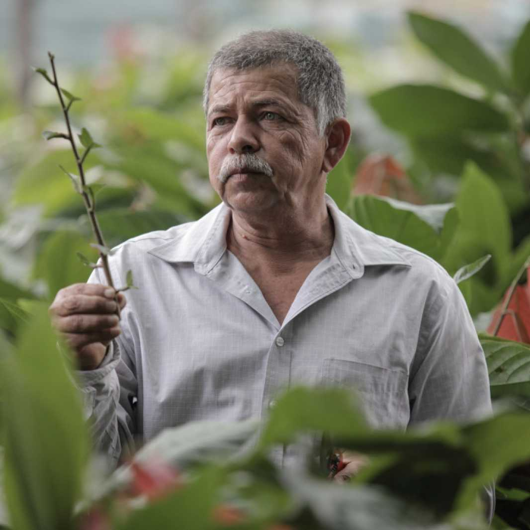 Sebastian Cedillos, 59, is the manager of La Casona Clonal Garden.