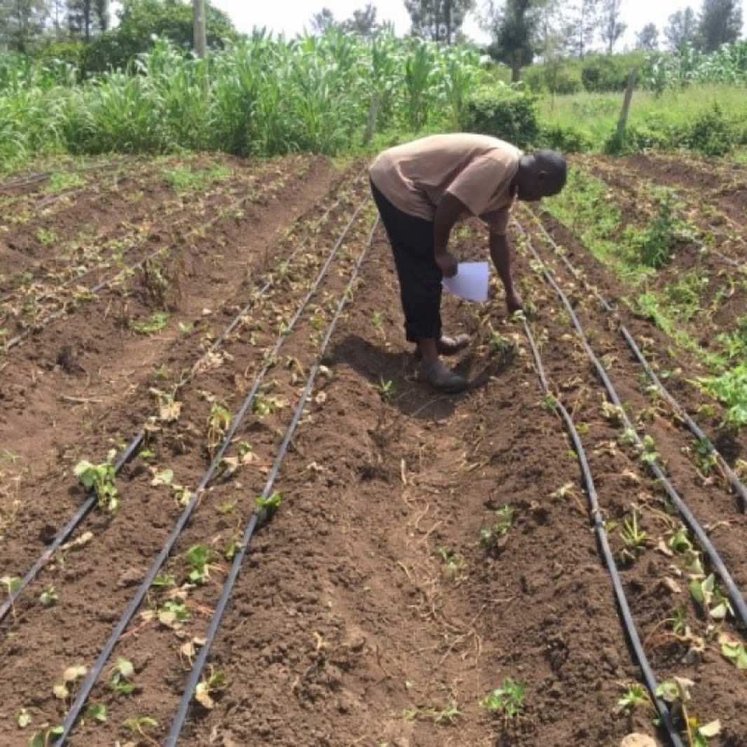 Irrigation systems are effective on small plots